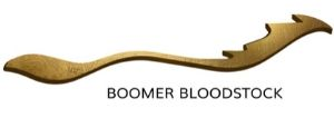 Boomer Bloodstock | Brisbane Racing Club