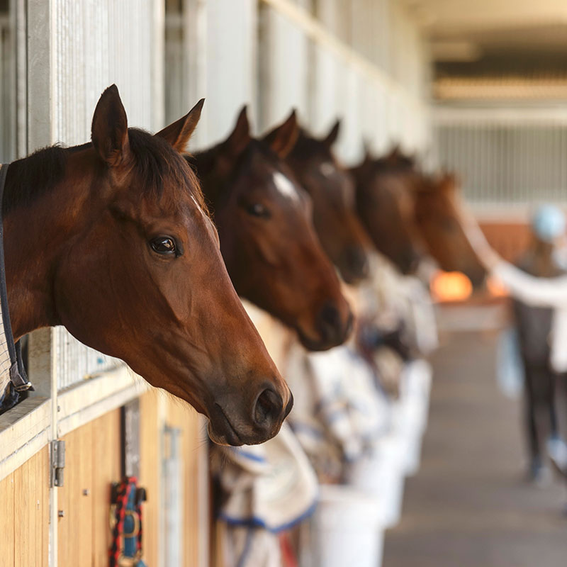 Our Trainers | Brisbane Racing Club